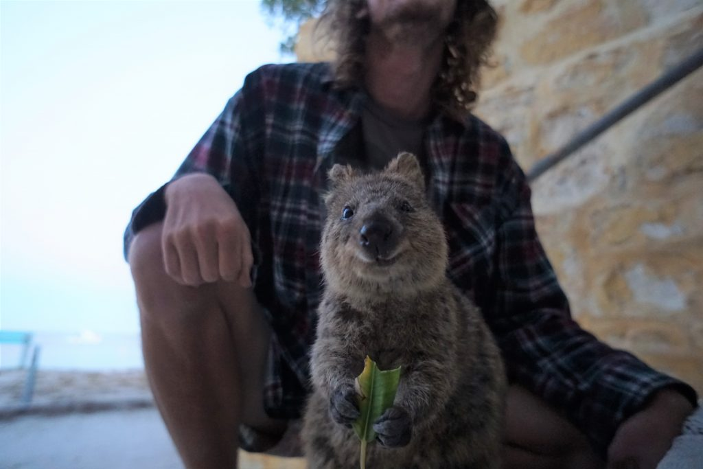 You can't find this cute animal everywhere in Australia! Head to Rottnest Island in WA to spot a Quokka