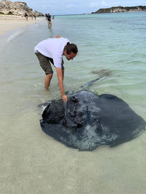 A friendly Stingray found at Hamelin Bay, a beach in Western Australia in the South West